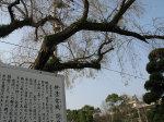 uwajima4.jpg